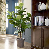 Bunny Williams Faux Fiddle Leaf Fig Tree