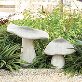 Outdoor Mushrooms
