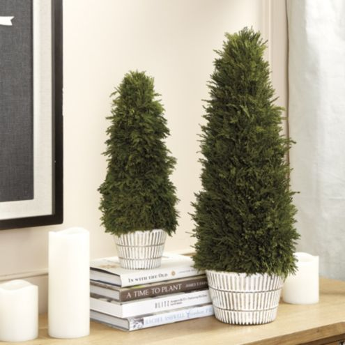 Bunny Williams Preserved Cypress Topiaries Large