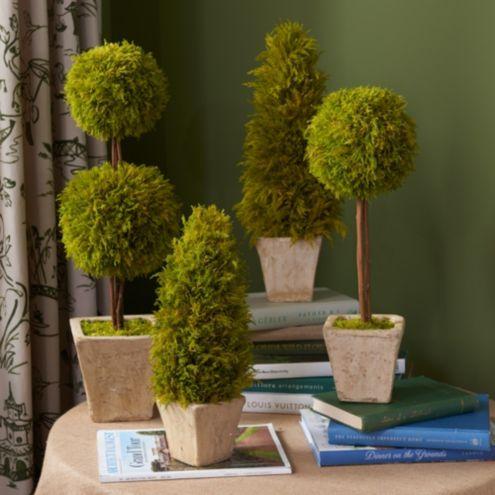 Preserved Lemon Cypress Topiary Ballard Designs