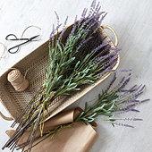 Suzanne Kasler Lavender Stems - Set of 3