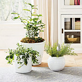 Meadow Textured Pots
