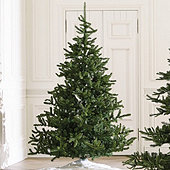 Nobilis Fir Tree