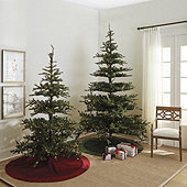 Prelit Noblis Fir Tree