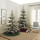 Prelit Flocked Noblis Fir Tree