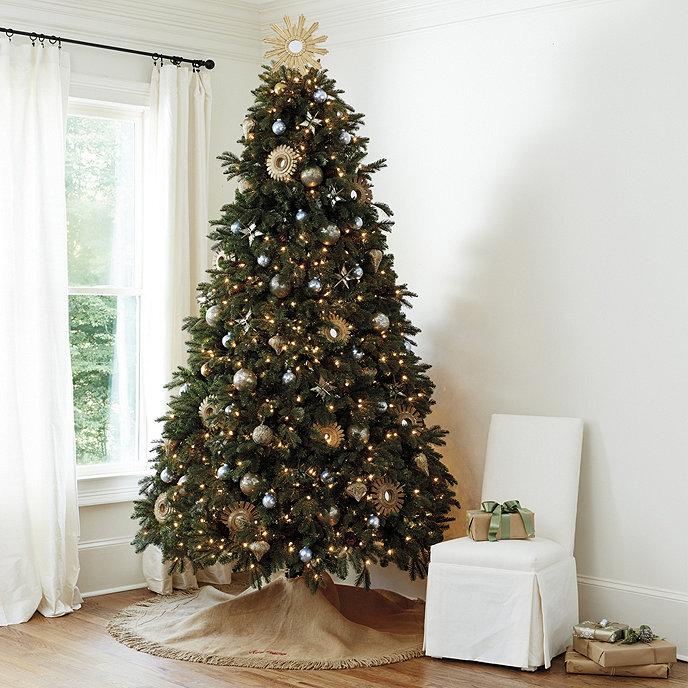 Noble Fir Christmas Tree.Noble Fir Christmas Tree