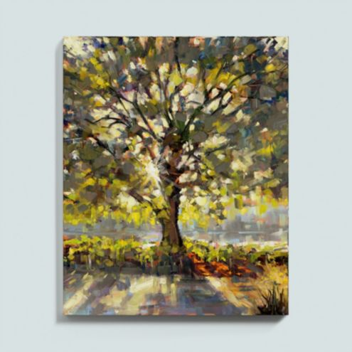 Summer Oaks Stretched Canvas