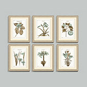 Buchoz Botanical Spa Art