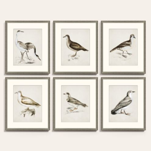 Coastal Bird Print Art