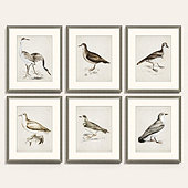 Coastal Bird Art