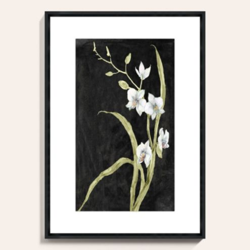 Midnight Orchid Art Print