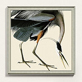 Audubon Blue Heron Art