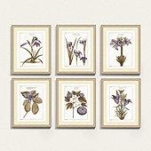 Buchoz Botanical Lavender Art