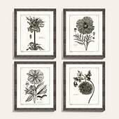 Botanical Etchings Art