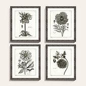 Botanical Etchings Art