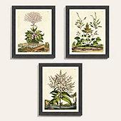 Garden Herbs Art