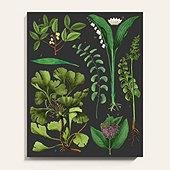 Green Botanical Study Unframed Art Print