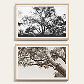 Tree Limbs Art